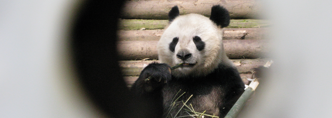 Q: Why don't pandas have more sex?